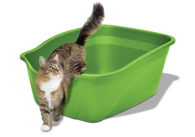 Cat_litter_hero-1000x700px