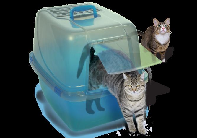cat-enclosed-1000x700