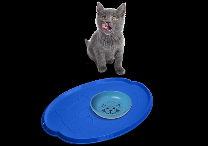 cat-accessories-2-1000x700