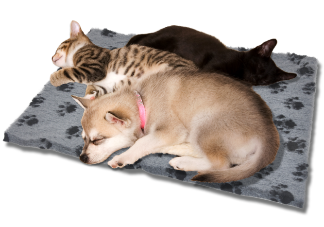cat-dog-beds-1000x700