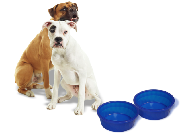 dog-dishes-2-1000x700