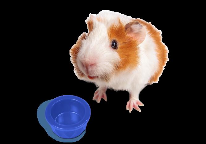 hamster-1000x700-4