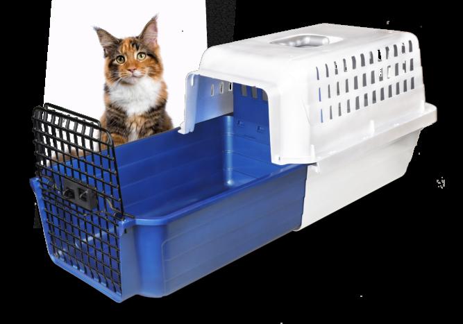 Calm_Carrier-3-4_w-cat_v1
